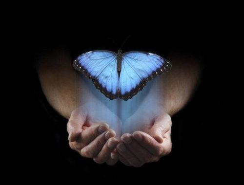Motyl w niebieskiej poświacie