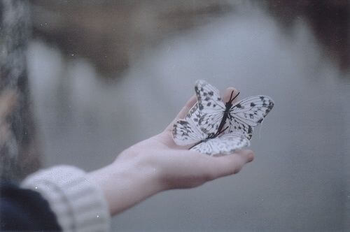 Motyle w dłoni.