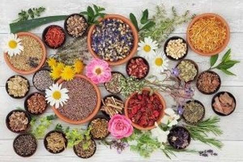 Naturalne środki uspokajające - poznaj najlepsze z nich