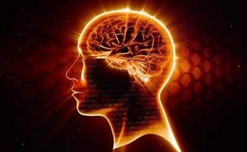 Omega-3 - jasne obszary w mózgu