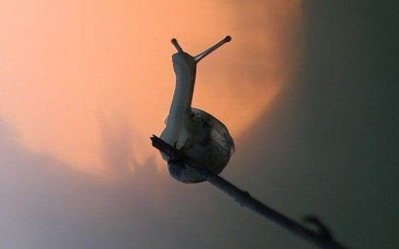 ślimak na patyku
