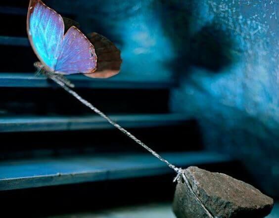 Uwięziony motyl