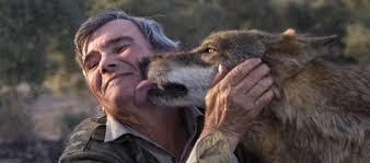 Mężczyzna i wilk.