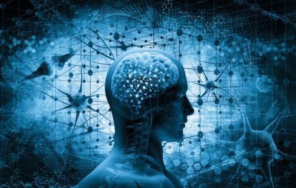 Neurobiologia odporności