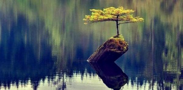 Drzewko wyrastające z pnia na jeziorze.