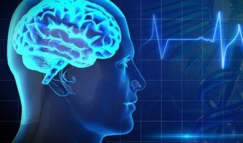 Mózg – 5 produktów najgorszych dla jego pracy