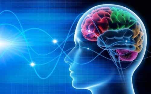 Fale mózgowe: delta, teta, alfa, beta i gamma