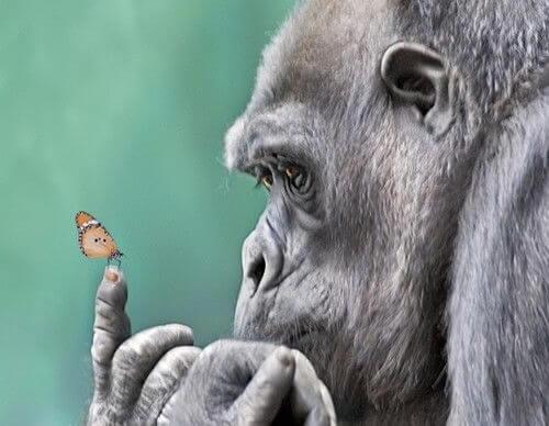 Goryl i motyl