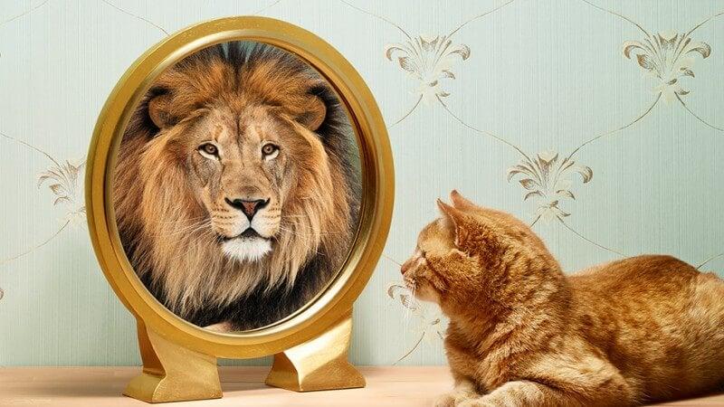 Odwaga - kot, który postrzega siebie jako lwa.