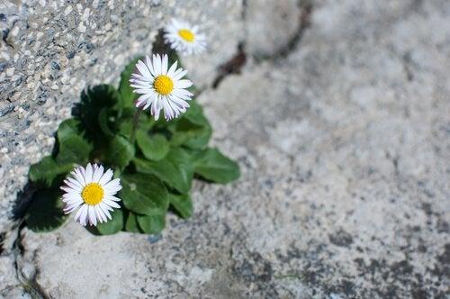 Kwiatki rosnące na kamieniu