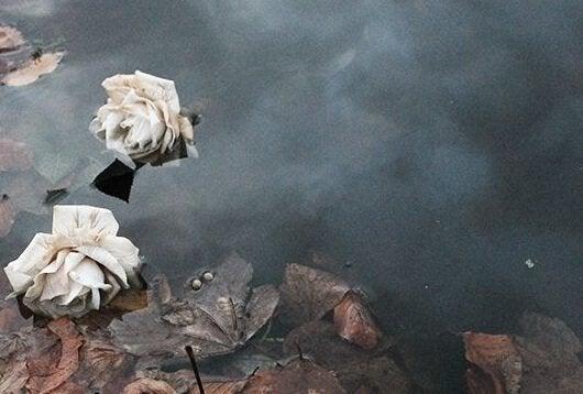 Kwiaty na wodzie