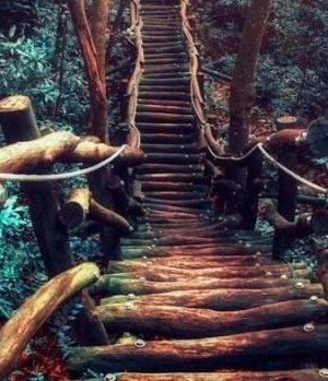 Leśny szlak