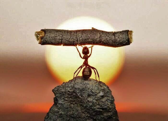Mrówka trzyma kawałek gałązki.