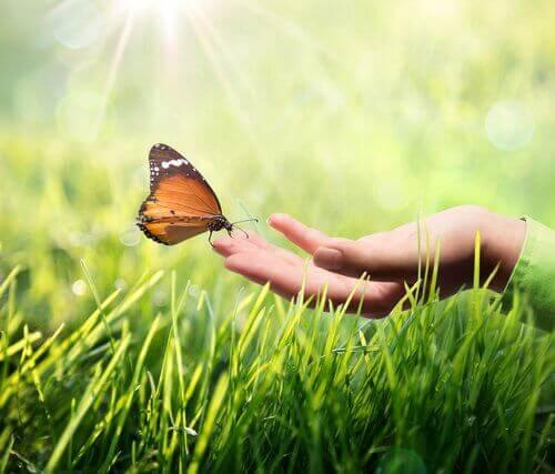 ręka z motylem