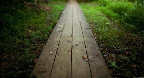 Ścieżka ze sztachet w lesie