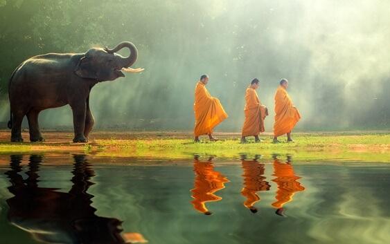 słoń podążający za mnichami