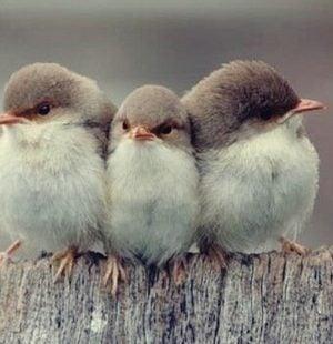 Trzy ptaki - trzy rodzaje przyjaźni