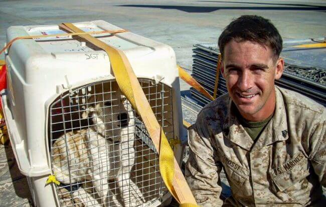 Żołnierz i pies