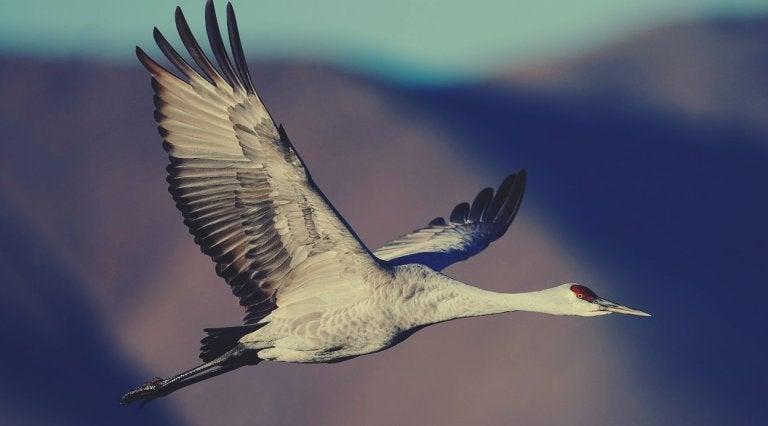 latający żuraw