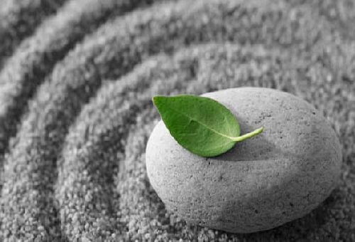 Liść na kamieniu