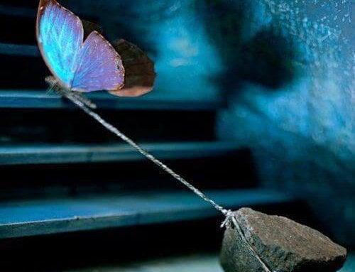 Motyl ciągnący kamień.