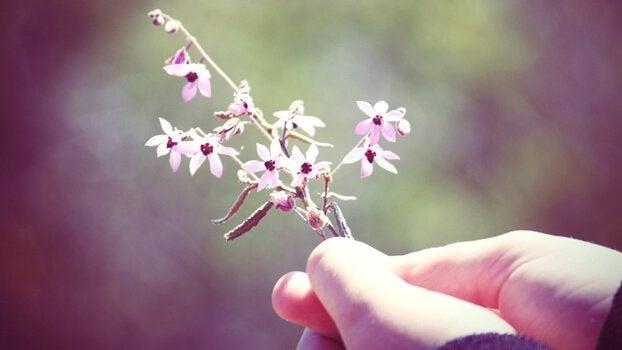 ręce trzymające kwiat