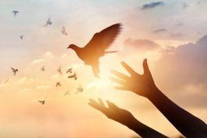 ręce wypuszczające ptaka na wolność
