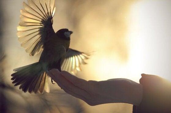 ręka podtrzymująca ptaka