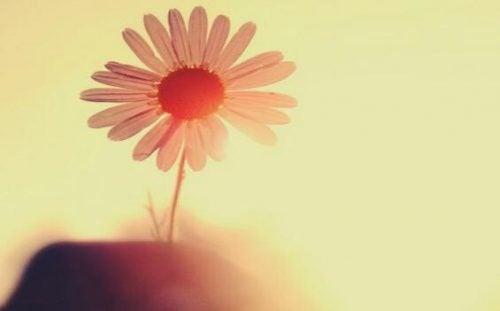 Różowy kwiat w pełnym słońcu