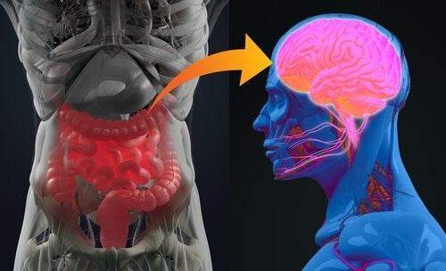 bakterie w mózgu i jelitach - psychobiotyki