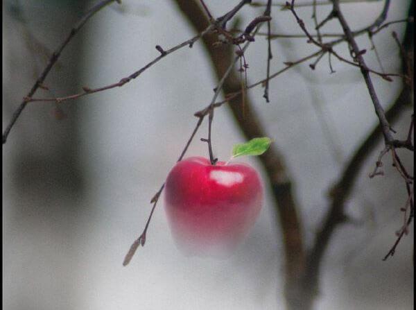 Czerwone jabłuszko.