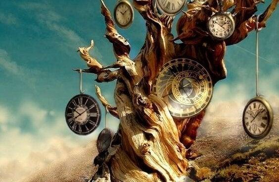 Pień drzewa z zegarami.