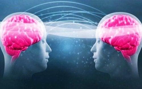dwie głowy z różowym mózgiem