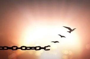 klucz z ptaków - wybaczenie