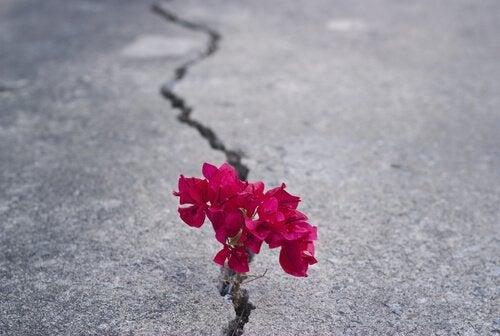 Kwiatek wyrastający z betonu.
