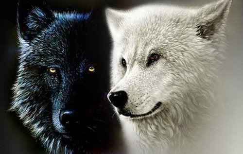 Legenda Czirokezów o dwóch wilkach - usiądź i posłuchaj...