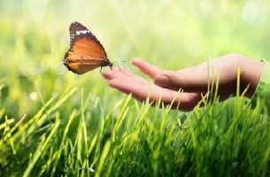 Komunikacja kinestetyczna - dłoń i motyl