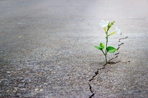 Kwiat wyrastający z betonowej szczeliny.