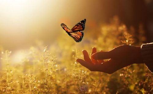 Motyle na dłoni