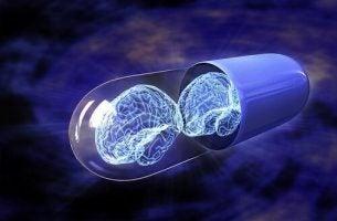 Dwa mózgi w pigułce