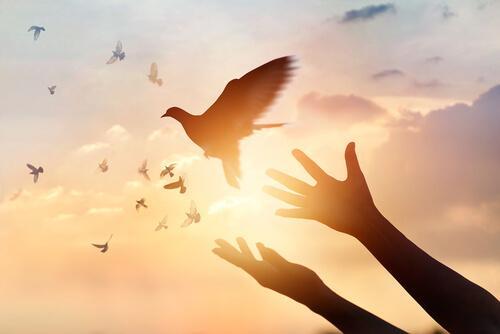 Ptak uwalniany z rąk człowieka odlatuje wolno