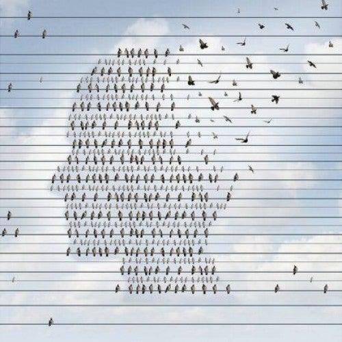 Ptaki siedzące na przewodach tworzą kształt głowy