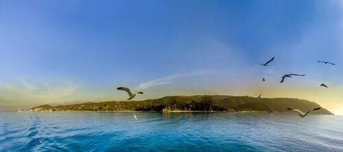 Ptaki nad jeziorem