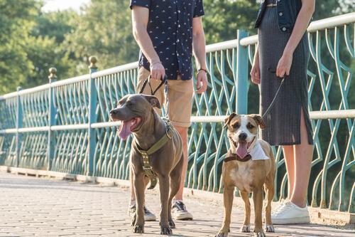 Rozmowa z nieznajomymi na spacerze z psem