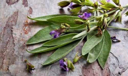 Korzyści płynące z szałwii -roślina zwłaszcza dla kobiet