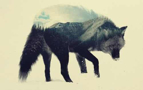 Wilk stepowy - niesamowite dzieło H. Hesse