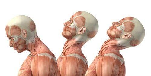 Ćwiczenia mięśni szyi