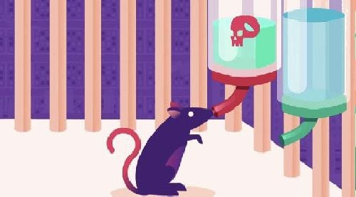 Eksperyment na szczurach