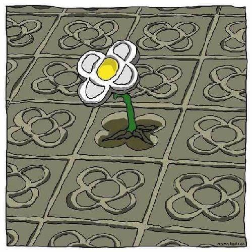 Kolorowy kwiat na betonie