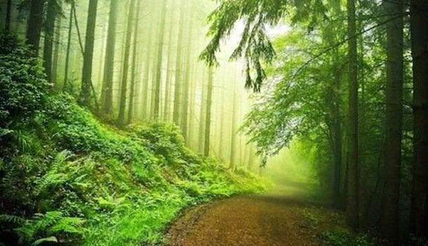 Test lasu - piękny las.